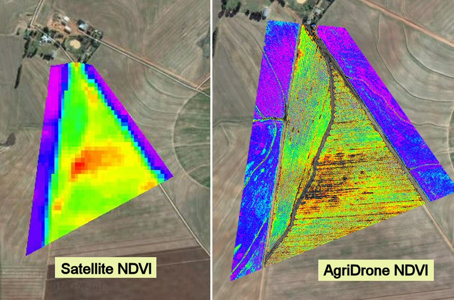 Drone NDVI vs Satellite NDVI Potatoes